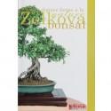 Guide de culture de l'orme de Chine en bonsaï