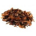 Graines d'érable de Montpellier acer monspessulanum sachet de 10 graines