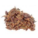 Graines de cèdre du Japon cryptomeria japonica sachet de 100 graines
