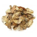 Graines d'érable champêtre sachet de 20 graines