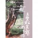 Les pins en bonsaï - Abe Kurakichi