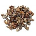 Graines de cyprès chauve sachet de 20 graines