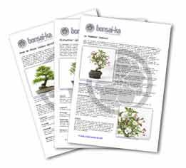Fiches de culture et d 39 entretien de bonsa par esp ce for Entretien d un bougainvillier