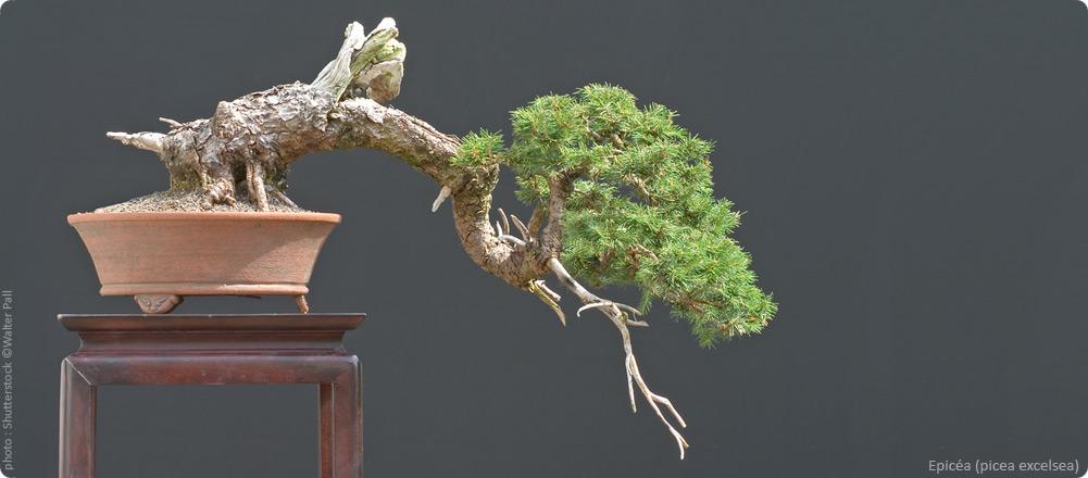 bonsai ka vente de bonsa 239 outils poteries et accessoires bonsai ka